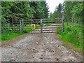 NO3493 : Alltcailleach Forest by Alan Findlay