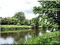 SJ6571 : River Weaver near  Kingsmead by Mike Harris