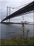 NT1278 : Forth Road Bridge by Stanley Howe
