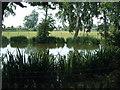 TQ4266 : Pond at Oakley Road by Mrs V Bryant