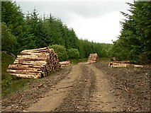 NN9047 : Log piles in Griffin Forest by Rob Burke