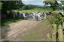 NZ0488 : Reception committee near Rothley by Graham Horn