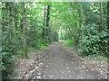 SZ0793 : Talbot Village: Slades Lane by Chris Downer