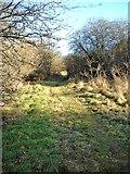 SU2167 : Savernake Forest by P L Chadwick