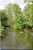 SU4828 : Confluence on River Itchen, College Walk, Winchester by Peter Facey