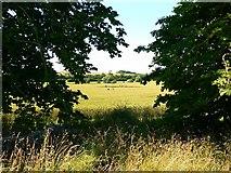 SU1070 : Wheat field near Avebury Manor by Brian Robert Marshall