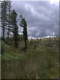 SN7850 : Northern section of Dalarwen forest by Rudi Winter