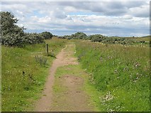 NT4681 : Path to the beach, Aberlady Bay by Richard Webb