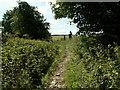 SE2506 : The bridleway at Gadding Moor Plantation by John Fielding
