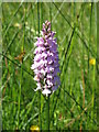 NY6475 : Orchid by Mike Quinn