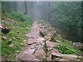NY1715 : Path in Burtness Wood by David Brown