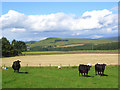 NY4681 : Pastures, Liddesdale by Andrew Smith