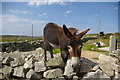 L7533 : Donkey leering over stone wall by Fractal Angel