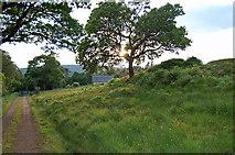NM7047 : Track approaching Achranich, Ardtornish estate by Donald MacDonald