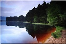 NH9718 : Loch Garten early morning by djmacpherson