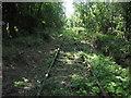 SJ2523 : Disused Railway west of Porth-y-waen by Chris Heaton