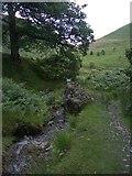 SN7751 : Doethie path by Rudi Winter