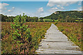 SD4583 : Boardwalk on Bellart How Moss by Gary Rogers