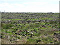 NY6475 : Cleared plantation on Hart Horn (3) by Mike Quinn