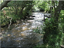 SS6549 : The River Heddon flows between the trees by Basher Eyre