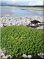 G8871 : Murvagh Beach from Mullanacross by louise price