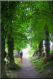ST6601 : St Augustines Well Cerne Abbas by Nigel Mykura