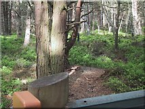 NH9718 : Woodland by the Osprey Centre at Loch Garten by Sarah Charlesworth