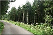 SH7140 : Road Through Woodland near Llan Ffestiniog by Jeff Buck