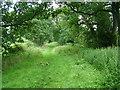 NY6622 : The Roman Road near Crackenthorpe by David Brown