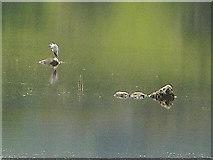 NN5810 : Heron and Rocks by Iain Thompson