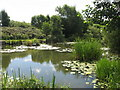 SJ4885 : Pond at Clincton Wood Local Nature Reserve by Sue Adair