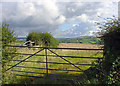 SN2931 : Fields and hedges near Sarnau, East Cilrhedyn by Dylan Moore