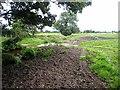 NY3359 : Powburgh Beck by Oliver Dixon