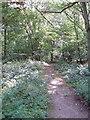SU8090 : Permissive footpath on Moorend Common by David Hawgood