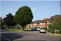 TQ2688 : Holne Chase and Rowan Walk by Martin Addison