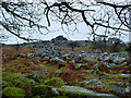 SX5669 : Leather Tor, Dartmoor by Cathy Cox