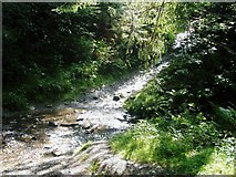 SD3494 : A stream crossing in Grizedale Forest by Peter S