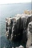 NU2135 : Farne Islands by Nigel Mykura