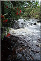 G9786 : The Corabber River and Mountain Ash by louise price