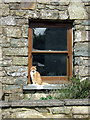 SM9729 : Window (with cat), Casnewydd Bach/Little Newcastle by ceridwen