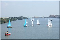 SD3317 : Dinghy racing on the Marine Lake by Bryan Pready