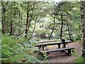 SJ5372 : Manley - Delamere Forest - picnic table near the Sandstone Trail by Mike Harris