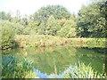 SU9846 : Peasmarsh Pond by Colin Smith