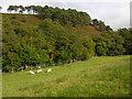 SN9684 : Hillside east of Llanidloes by Nigel Brown