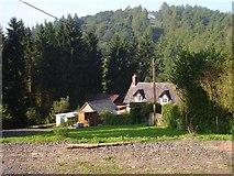 SJ2504 : Hollybush Cottage by Penny Mayes