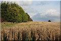 TL8665 : Field boundary at Westfield Farm by Bob Jones