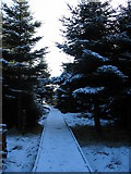 NS6351 : Wintry boardwalk at Langlands Moss by Dannie Calder