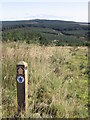NY5381 : Waymarker by David Liddle