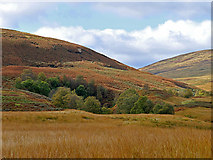 NN7713 : Trees by the Corriebeagh Burn by Dr Richard Murray
