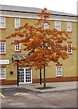 TQ3095 : Autumn Colours by Highlands Village Hall, Florey Square, London N21 by Christine Matthews